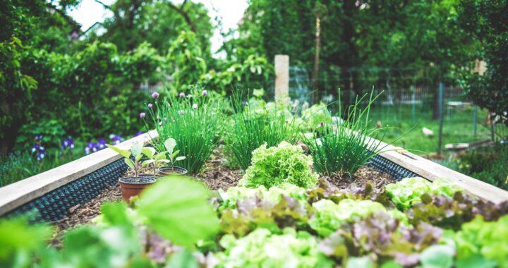 STABLZ for Planter Gardening